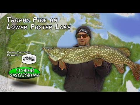 Trophy Pike on Lower Foster Lake