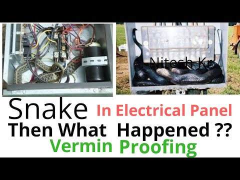 Snake In Electrical Panel At Work | Electrical Work Safety | Vermin Proofing | English
