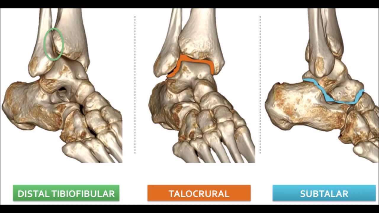 Tobillo Anatomía Y Biomecánica