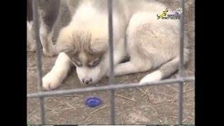 Зоогостиницы, приюты, бродячие собаки и кошки, заболевания, передающиеся животными, в т.ч. бешенство