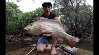 Full Season of Mangrove Jack Fishing Tips (Everything I Learnt)