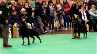 Crufts 2013 - Rottweiler Best Of Breed