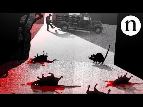 Blood, rats and anticoagulants: The story of warfarin