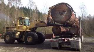 Monster old growth spruce on Peterbilt.