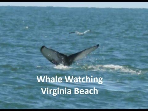 Whale Watching Virginia Beach P900 Wildlight Move Like The Ocean