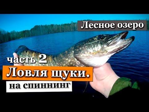 Ловля щуки весной на спиннинг. Ленинградская область. Лесное озеро. Часть 2.