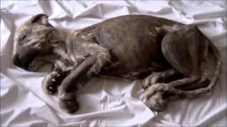 Cachorro de león de las cavernas congelado (realizado por el escultor Juan Villa)