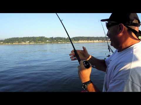 Olympic peninsula steelhead funnydog tv for Salmon fishing puget sound