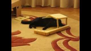 Кошка Маруська ловит мышку