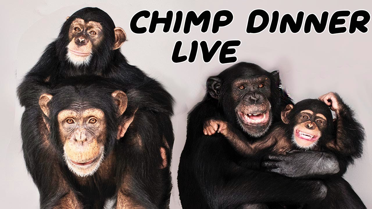 The one and ONLY Chimp Dinner Live| Sunday July 18