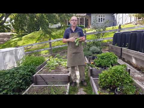 How to grow Veggies at home in Australia the easy way – Free series by Brian and Kaylene