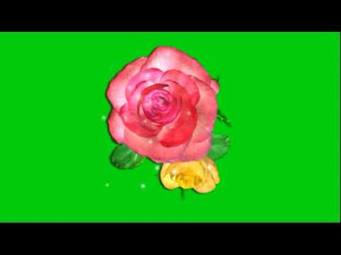 Flower Animation Green Screen | Red Rose Animation Green Screen | Flower 3D Motion Green Screen