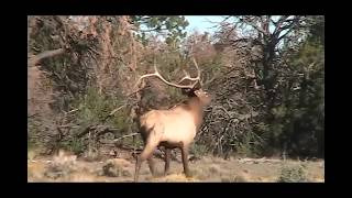 2018 Unit 9 Rifle Elk Hunt