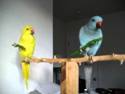 Beau And Saffron Eating Green Beans