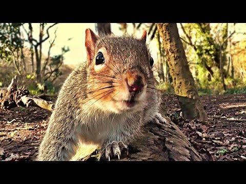 Funny Videos For Cats To Watch - A Lovely Bit of Squirrel
