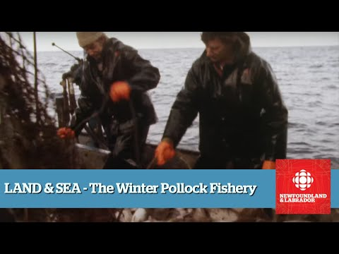 Land & Sea - The Pollock Fishery - Full Episode