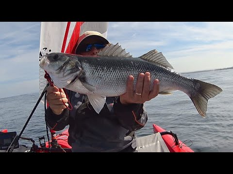 Sea Bass at Offshore Reefs 2 - Trolling with Lures - Kayak Fishing - 4K 50fps