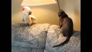 Говорящие животные!!!Жесть!!!