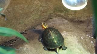 Черепахи в зоопарк Копенгагена, Дания ч.2
