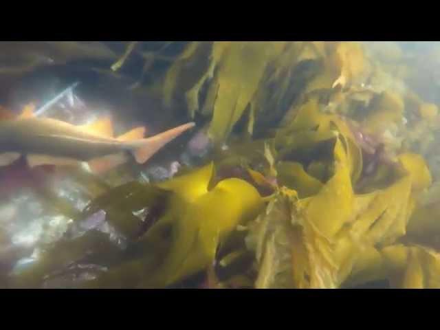 Spearfishing norway 2015