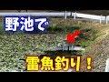 【釣り】野池で雷魚釣り!【フロッグ】 の動画、YouTube動画。