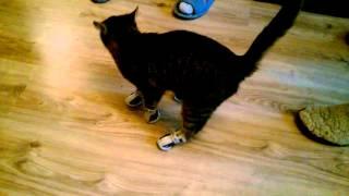 Кошка в ботинках для собак