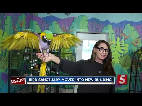 Exotic Bird Shelter Migrates To New Hermitage Home