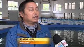 Breakthrough in Chinese sturgeon reproduction