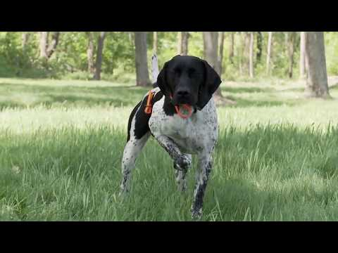 Train your pointer!
