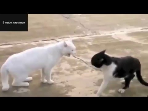 Funny Cats And Kittens Meowing Compilation 2016 #2