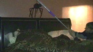 GIANT SPIDER WAKE UP PRANK!