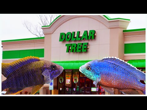 10 Reasons Why To Shop At The Dollar Tree For Aquarium Supplies! (Plus A Few Bonus Tips)