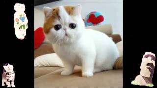 Funny Animals Videos Youtube Animal Compilation Free Download Funny Videos Funny Cat Toys