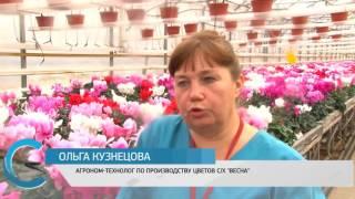 """Губернатор Валерий Радаев побывал в тепличном комплексе """"Весна"""""""