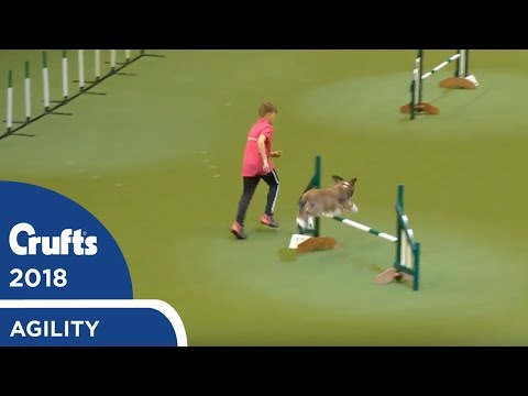 YKC Agility Dog of the Year | Crufts 2018
