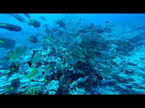 SCUBA Diving in Bora Bora (Tapu), French Polynesia