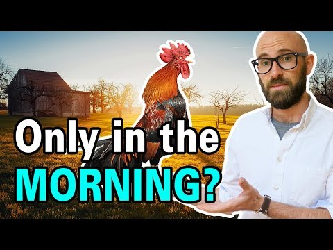 Why Do Roosters Crow in the Morning?