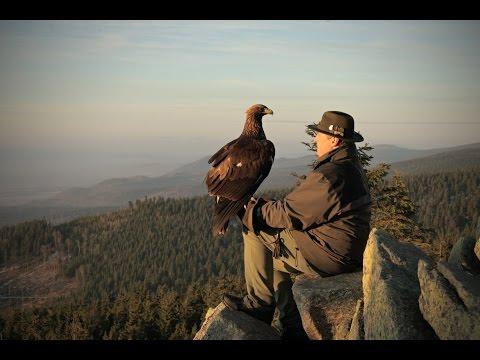 Falconry Today Documentary - trailer