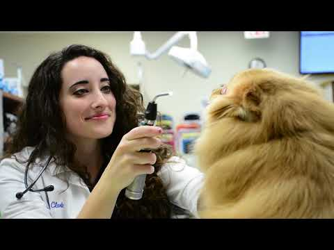 ER | Nashville Veterinary Specialists And Animal Emergency