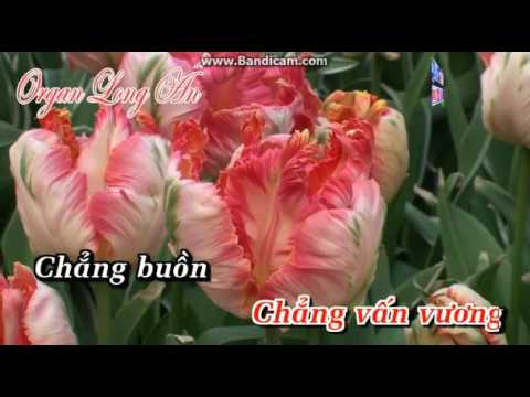 karaoke Lời Cuối Cho Tình Yêu SC - ngoc lien & hong nguyen