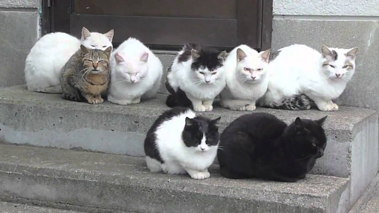 The Cat Gang Youtube