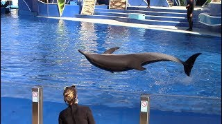 Bullet Side Breach Training Session (Seen during Inside Look at SeaWorld San Diego 9/15/18)