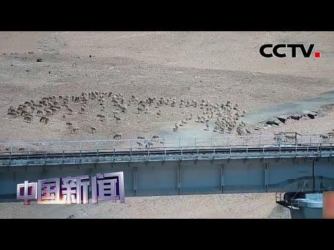 [中国新闻] 青海:生态之