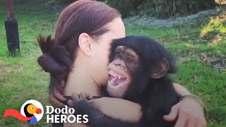 When You Just Can't Stop Rescuing Chimpanzees | The Dodo Heroes