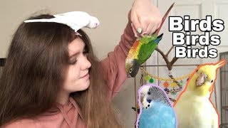 Stuck in Quarantine with BIRDS!! | A Day in the Life With My Parrots