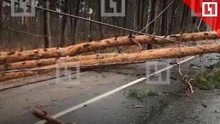 Дерево перегородило дорогу в Барвихе