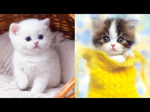Baby Cats – Cute and Funny Cat Videos Compilation
