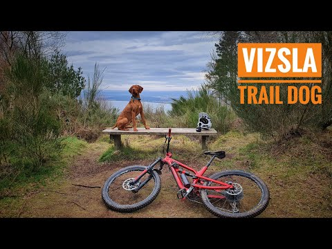 My MTB Trail Dog Loki  Vizsla MTB