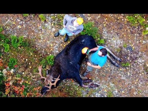 The Great Maine Moose Hunt | 2020