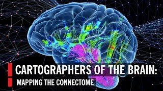 Cartographers of the Brain: Mapping the Connectome